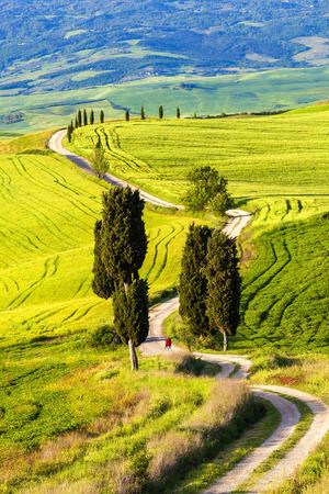 Tuscany, Landscape panorama, Gladiator road with cypress trees,Toscana - Italy 免版税图像