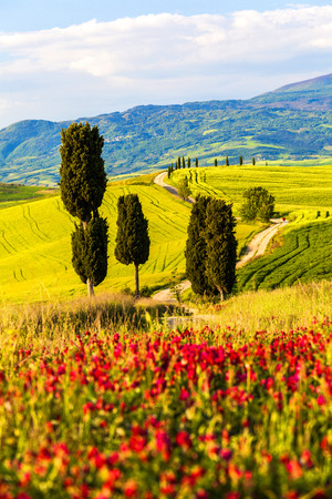 Tuscany, Landscape panorama, Gladiator road with cypress trees,Toscana - Italy Stock fotó