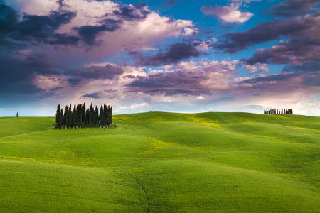Famous tree group in Val d'Orcia, Tuscany, Italy