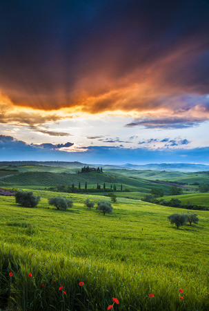 Belvedere landscape at sunrise morning with flowers and magic clouds. Idyllic view of hilly farmland in Tuscany in beautiful morning light, Italy.