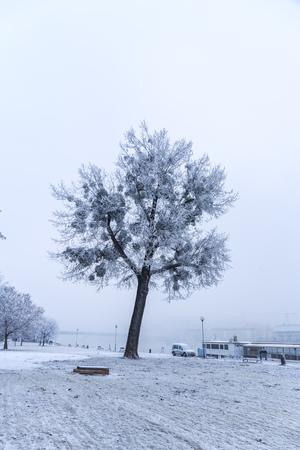 Promenade in Bratislava park in a snowy winter day, Sad Janka Krala 免版税图像