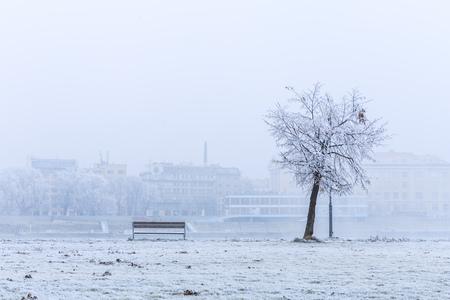 Bench and tree in park Sad Janka Krala, the Promenade near Danube river in Bratislava, Capital city of Slovakia 免版税图像