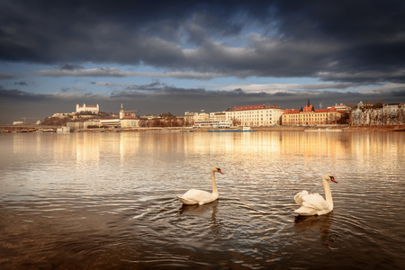Swan couple lovers on Danube river, Bratislava castle and st. Martins church, vintage winter morning, Slovakia 版權商用圖片