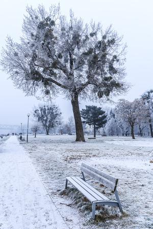 Bench and trees in park Sad Janka Krala, the Promenade near Danube river in Bratislava, Capital city of Slovakia