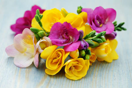 freesia: bunch of colorful freesia flowers - flowers and plants