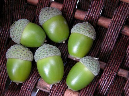 basket of green acorns Stock Photo - 505090