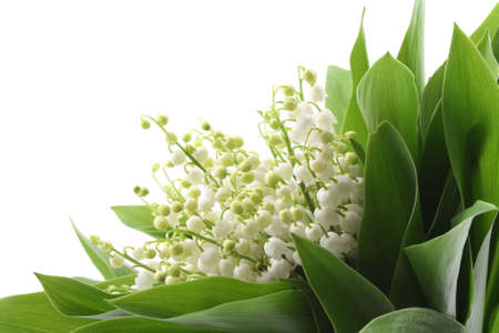 lovely bunch of lily of the valley isolated on white photo