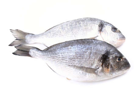 the dorada: close-ups of two dorada fish isolated on white