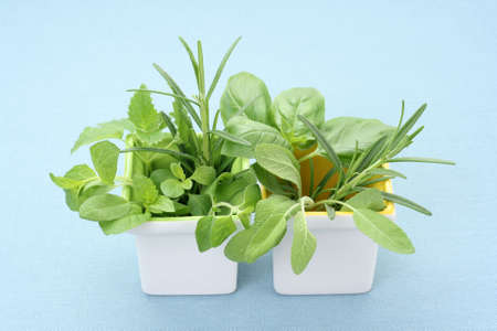 full of various herbs - foods and drink Stock Photo - 3147231