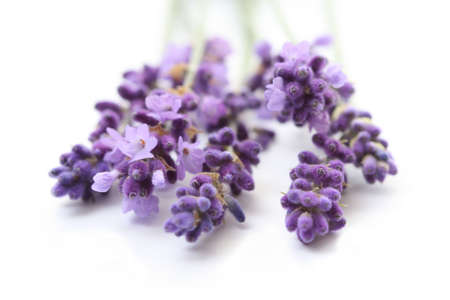 odour: bunch of lavender flower isolated on white close-ups Stock Photo