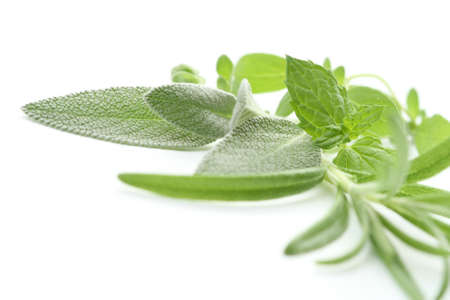 fresh and various herbs isolated on white photo