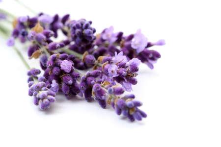 lavanda: manojo de flores de lavanda aislados en blanco estrecha-ups