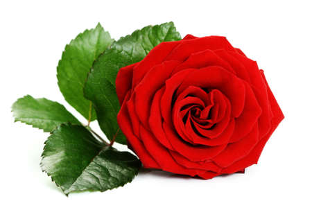 closeups: close-ups of beautiful red rose isolated on white Stock Photo