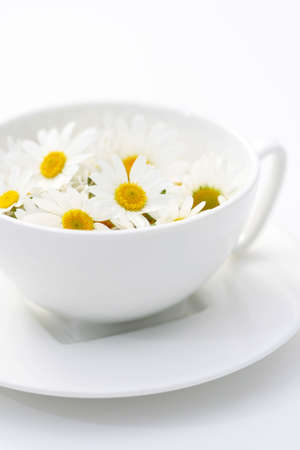 cup of camomille tea - food and drink alternative medicine photo