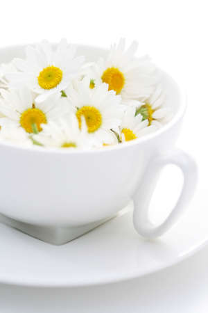 cup of camomille tea - food and drink alternative medicine Stock Photo - 5354469