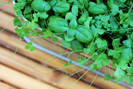 box of fresh herbs - basil parsley and chive - herbs and spices photo