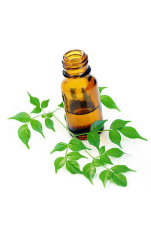bottle of aromatherapy oil and fresh green leaves - beauty treatment photo