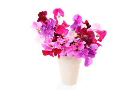 bunch of sweet pea flowers on white background - flowers and plants photo