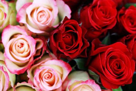 Hintergrund des schönen Rosen - Blumen und Pflanzen Standard-Bild