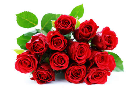 bunch of red roses on white background - flowers and plants photo