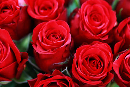background of beautiful roses - flowers and plants Zdjęcie Seryjne