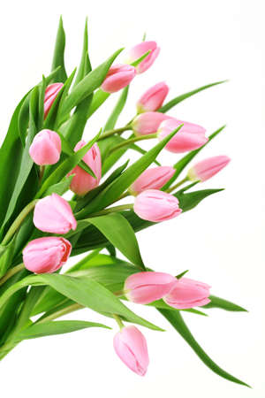 bouquet of lovely pink tulips on white background - flowers photo