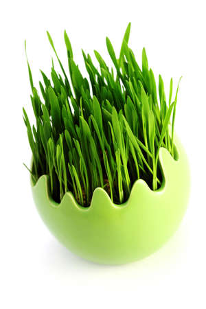 green grass in egg on white background - flowers and plants photo