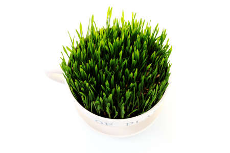 green grass in big cup on white background - flowers and plants Stock Photo - 6803231