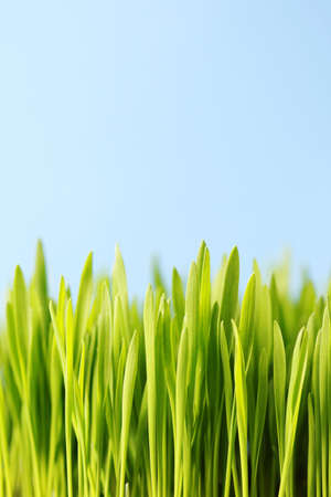 close-ups of green grass -  flowers and plants Stock Photo - 6803234