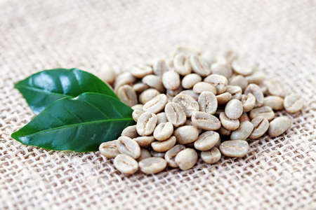 unroasted: pile of unroasted coffee beans with green leaves - coffee time