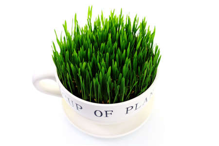 green grass in big cup on white background - flowers and plants Stock Photo - 7045950