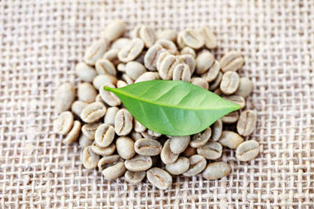 unroasted: pile of unroasted coffee beans with green leaf - coffee time