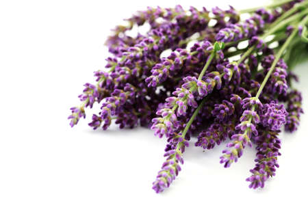 lavender coloured: bunch of lavender flowers isolated on white - flowers and plants