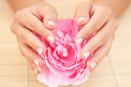 beautiful female hands with pink rose - beauty treatment Stock Photo - 7338670