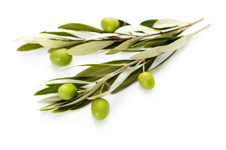 olive branch: olive branch on white background - food and drink