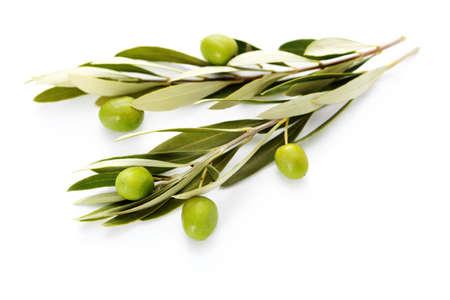 foglie ulivo: ramoscello di ulivo su sfondo bianco - cibo e bevande