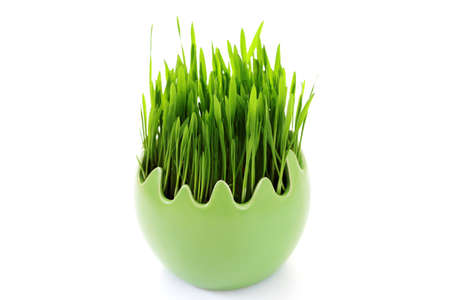green grass in egg on white background - flowers and plants Stock Photo - 7933974