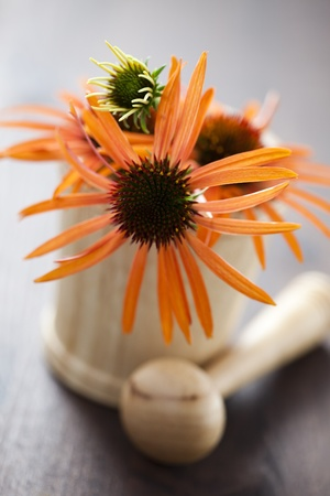 mortar and pestle with echinacea flowers - beauty treatment Stock Photo