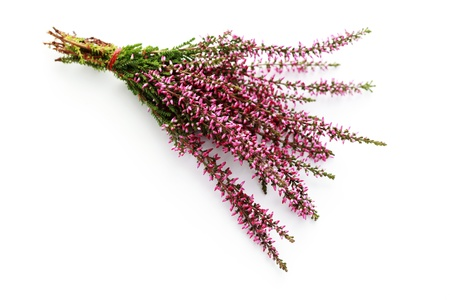 bunch of heather on white background - flowers and plants photo
