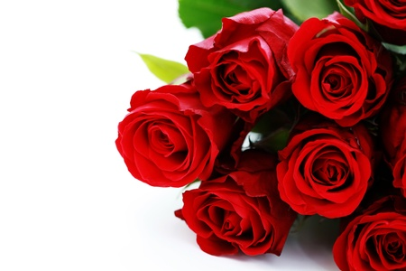 single red rose: bunch of red roses on white background - flowers and plants Stock Photo