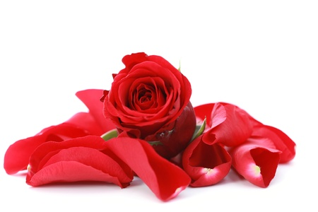 red rose petals on white background - beauty treatment
