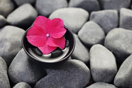 Kieselsteine ??mit Schüssel mit Wasser und frischen Blumen - Beautybehandlung / flachen DOF / Standard-Bild - 10343052