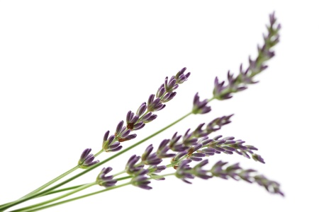 bunch of lavender flowers - flowers and plants Standard-Bild