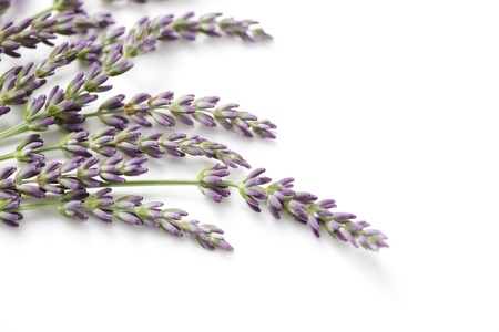 bunch of lavender flowers - flowers and plants Stock Photo