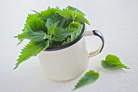 fresh nettle on white background - healthcare and medical Stock Photo