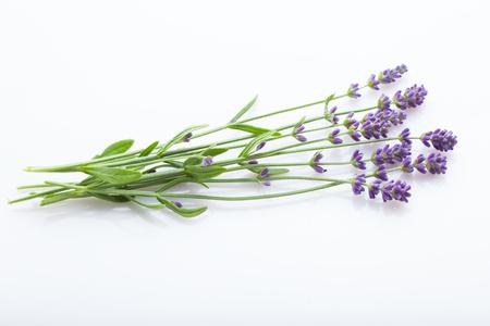 Paquete de flores de lavanda sobre un fondo blanco - flores y plantas Foto de archivo