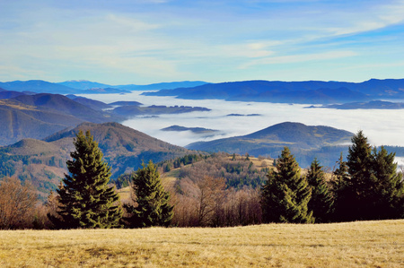 inversion: Winter sunny day panorama with trees and inversion Stock Photo