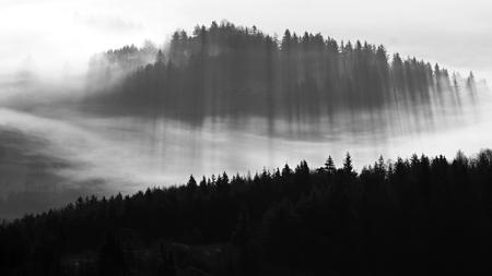 fog: Autumn landscape with trees an fog