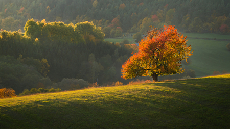 Fall in Slovakia. Meadows and fields landscape with cherry tree near Banska Bystrica. Autumn color trees at sunset. Stok Fotoğraf