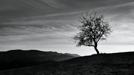 Fall landscape in Polana region, Slovakia. Black and white country view at sunrise. Silhouette of autumn trees.
